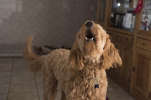 štěkající pes.jpg